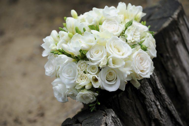 flower-393051_1920